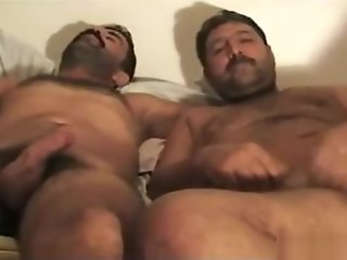 hairy horny turkish bears